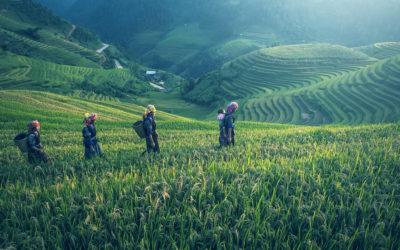 El exceso de CO2 en el planeta también afecta a alimentos básicos